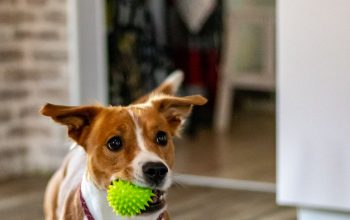 Why You Might Need Dog Daycare Services
