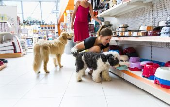 Discover The Importance Of Pet Supplies
